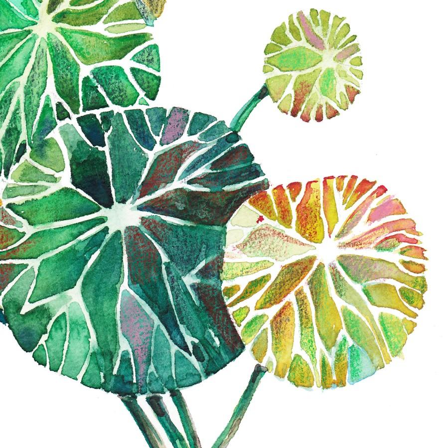Postcard: Stephania Erecta Craib (watercolor)